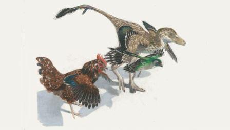 Самое полное древо динозавров показало их превращение в птиц