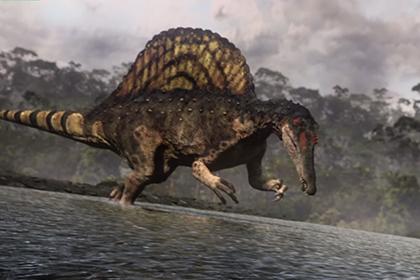 Крупнейший хищный динозавр