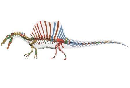 характерный «парус» на спине динозавра