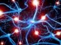 Передано сообщение из одного человеческого мозга в другой