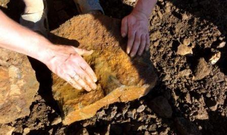В Рязанской области обнаружены останки плиозавра
