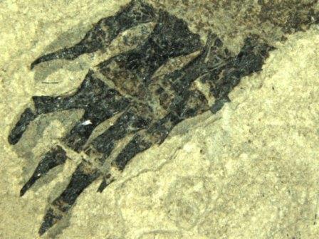 родственники современных саламандр имели одну или даже несколько отросших конечностей