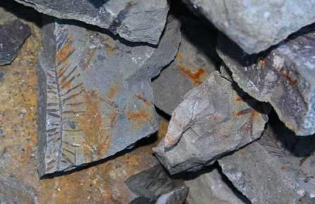 На Чукотке обнаружили древнюю теплолюбивую флору