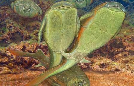 Панцирные рыбы размножались плечом к плечу