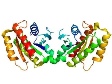 Структура белка LRRK2