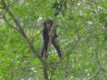 Шимпанзе планируют свой завтрак загодя