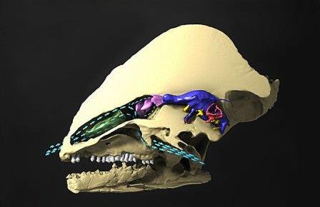 В мозгу динозавров было воздушное охлаждение