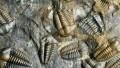 Пермское вымирание была спровоцировано другим массовым вымиранием