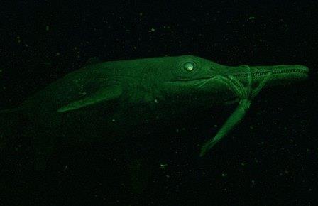 Глубоководная охота ундорозавра