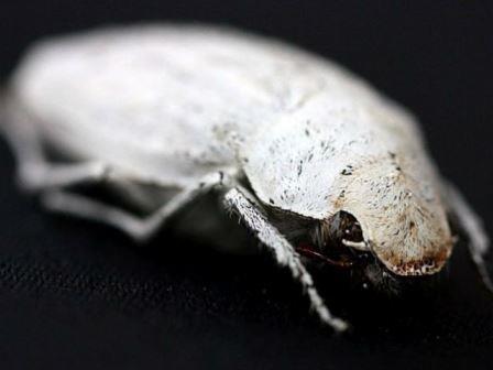 Секреты бриллиантового жука
