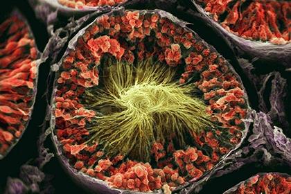 Больше всего уникальных белков человека обнаружено в яичках