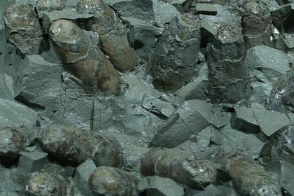 Кладка яиц динозавров