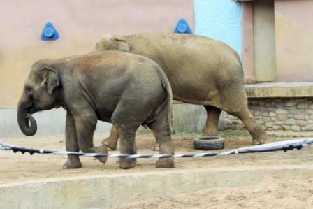 В московском зоопарке откроют музей слонов