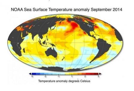 Карта температур воды на поверхности океана в сентябре 2014 года.