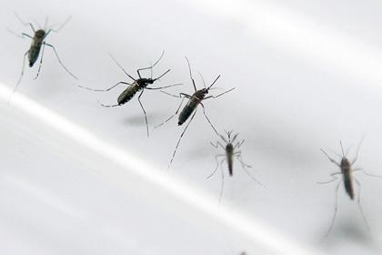 Комары Aedes aegypti