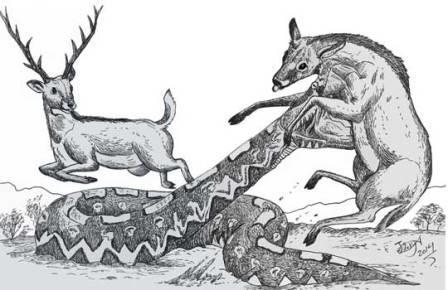 Laophis crotaloides атакует небольшого оленя