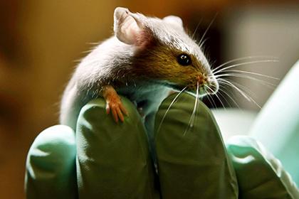 Мыши не годятся для медицинских испытаний