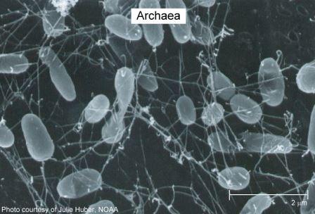 Древнейшая форма жизни на Земле поможет нам в борьбе с инфекционными бактериями