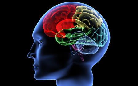 «Виагра» для мозга