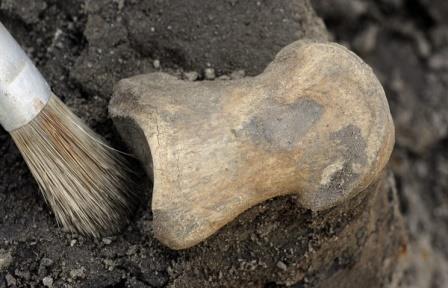Российские археологии отправятся в Крым для исследования античного некрополя