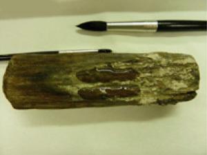 Для демонстрации возможностей новой методики консервации деревянных исторических артефактов небольшие образцы древесины корпуса Мэри Роуз были обработаны новым полимером