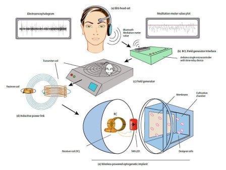 Схема эксперимента по изменению экспрессии генов с помощью сигнала ЭЭГ