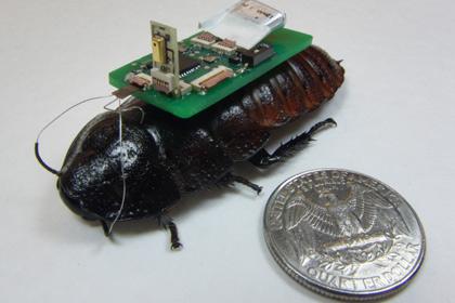 Тараканы-киборги ищут людей под завалами