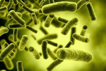 В водах Бразилии нашли новую супербактерию