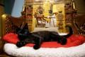 Популярность в СМИ отрицательно влияет на кошек