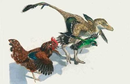 Курица оказалась самой близкой к динозаврам птицей