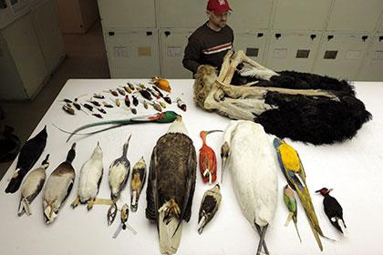 Крупнейший международный проект генетиков ответил на главные вопросы эволюции птиц