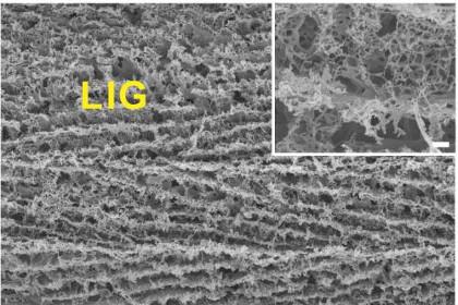 Структура нового материала под микроскопом