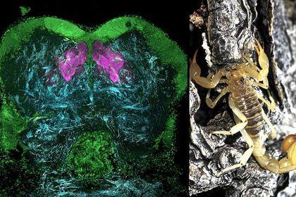 Ученые ищут общие черты мозга у насекомых и людей