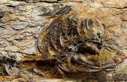 В Южной Корее обнаружили крошечного динозавра