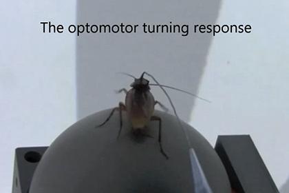 сверхострое зрение тараканов.