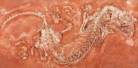 Детская находка прояснила раннюю эволюцию рептилий
