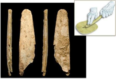 Окаменелости костяных орудий, которые, вероятно, использовались для обработки шкур животных