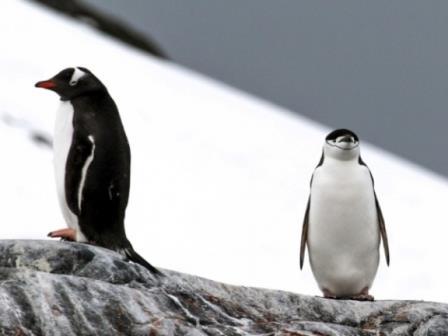 Климатические изменения создают опасность для пингвинов