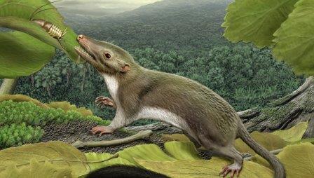 Предполагаемый предок всех плацентарных млекопитающих