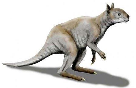 Simosthenurus occidentalis