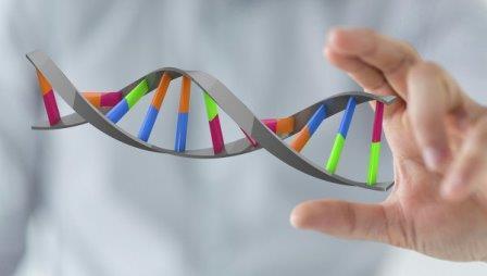 Биологи научились включать произвольные гены при помощи РНК