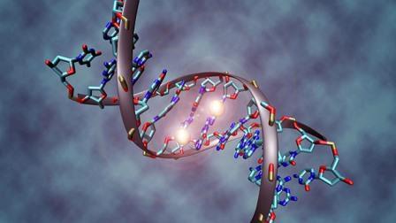 Продолжительность жизни человека связана с изменениями в ДНК