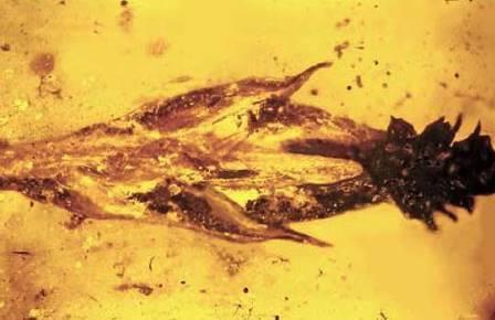Динозавров уличили в употреблении наркотиков