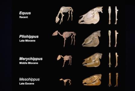 Ученые доказали увеличение размеров животных по ходу эволюции