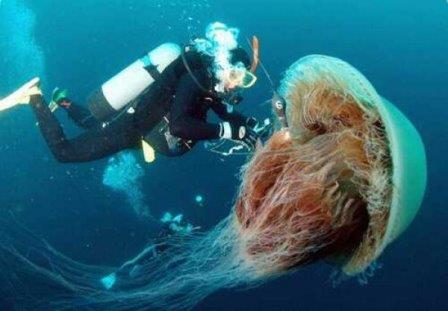 Ученые нашли сходства между человеком и медузой