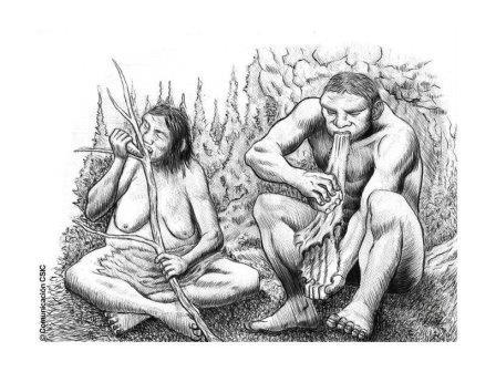 У неандертальцев существовало разделение труда