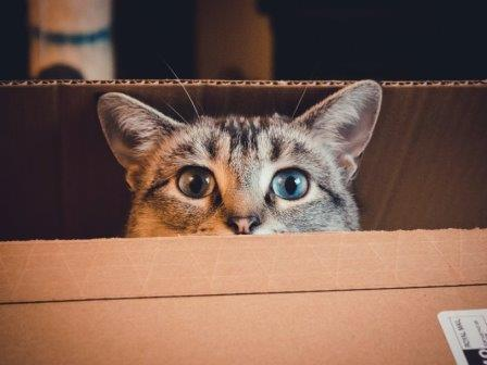 Тяга кошек к коробкам