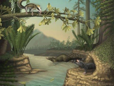Agilodocodon scansorius (на дереве), Castorocauda lutrasimilis (в воде) и Docofossor brachydactylus