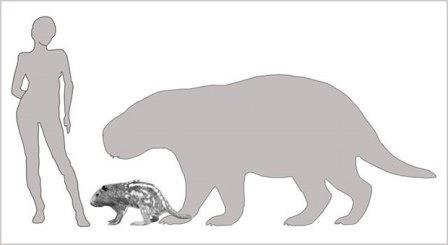 Резцы грызуна-гиганта