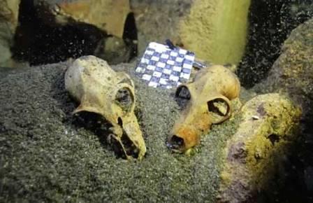 Гигантские лемуры устраивали кладбища в пещерах
